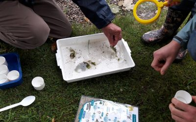 Wildlife Wednesdays – Pond Dipping with Really Rural