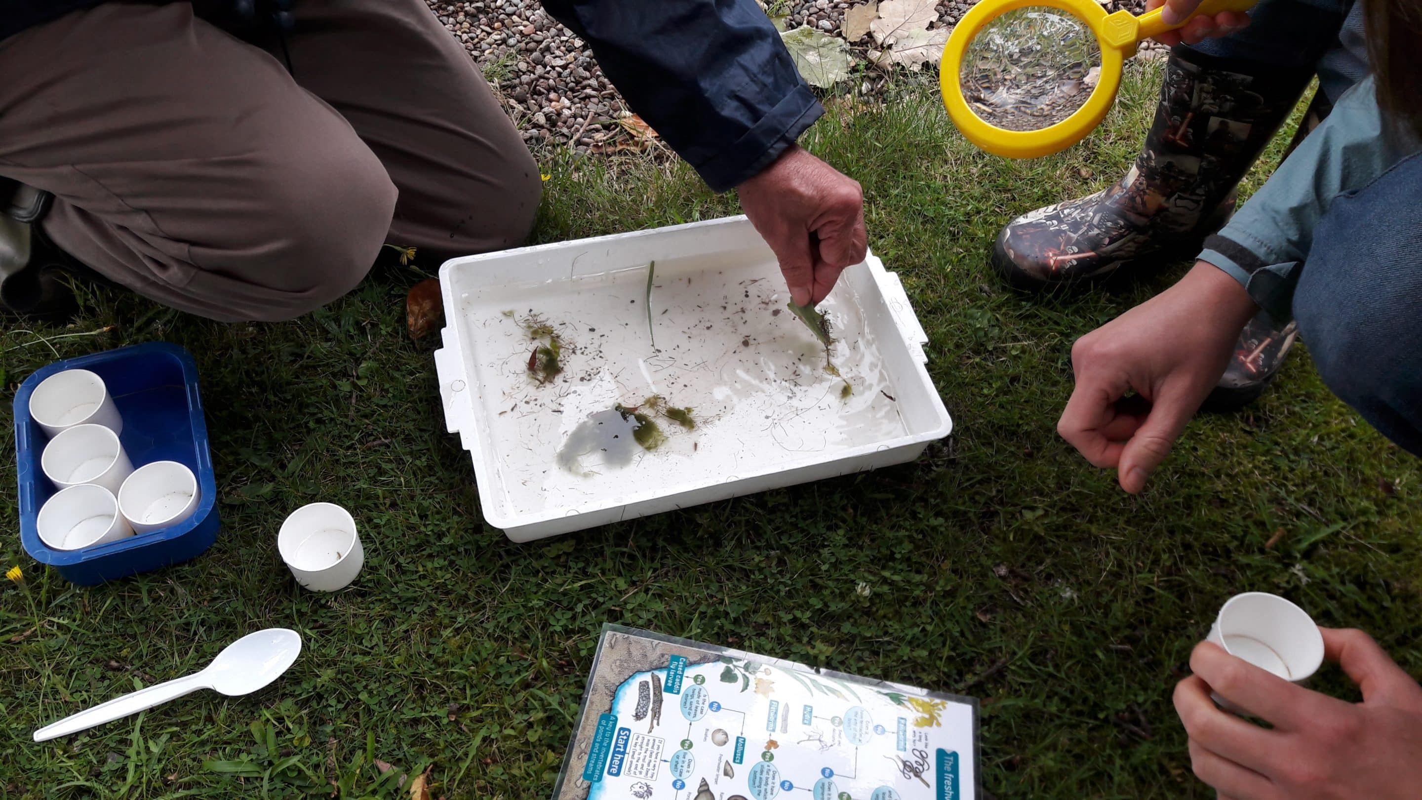 8_August 1st Pond dipping 2