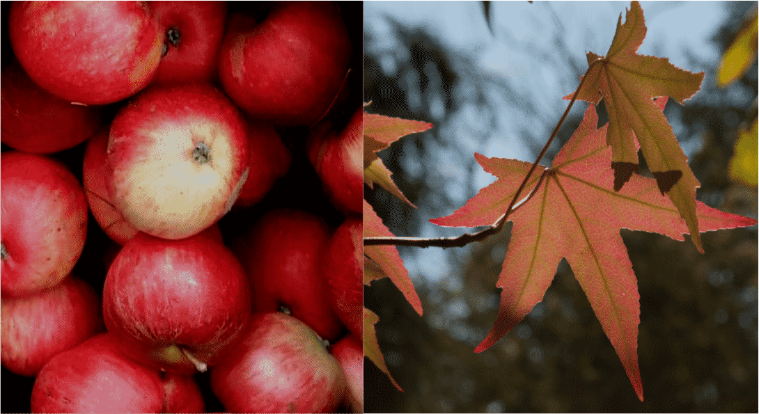 Apple Pressing and Autumn Crafts