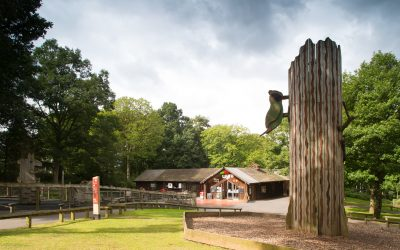 Wyre Forest Discovery Centre – Horse Riding Trails