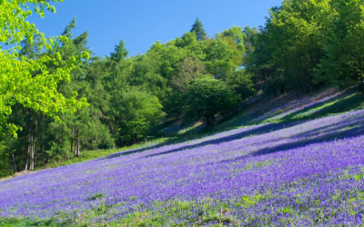 10 Signs of Spring in Worcestershire