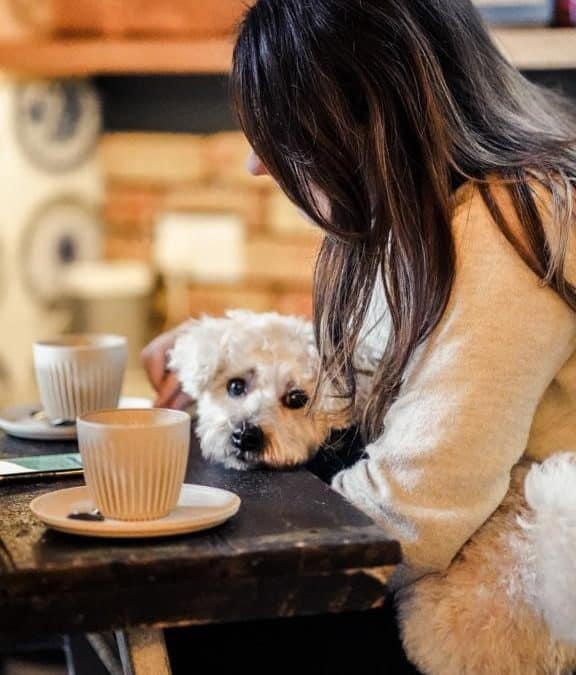 Dog Friendly Cafes